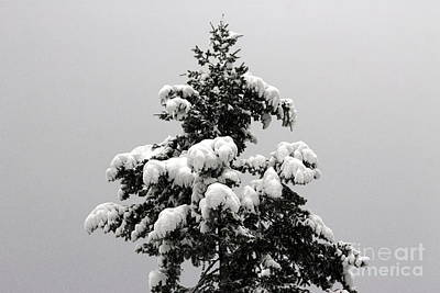Photograph - Snow Tree by Leone Lund