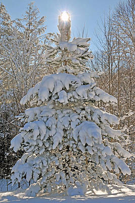 Photograph - Snow Tree Of Light by Alan Lenk