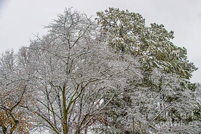 Photograph - Snow Trees 1333t by Doug Berry