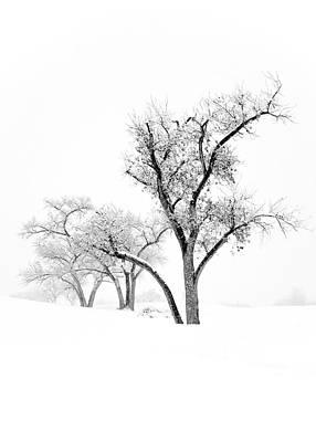 Snow Trees IIi Art Print by Glennis Siverson