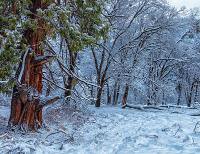 Photograph - Snow Trees by Jonathan Nguyen