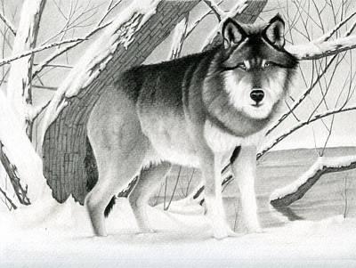 Stillness Drawing - Snow Wolf  by Tashi Delek