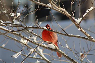 Photograph - Snowbird by Vikki Angel