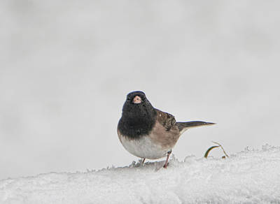 Photograph - Saucy Sparrow by Marilyn Wilson