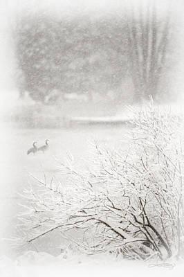 Photograph - Snowbirds 2 by Jill Love