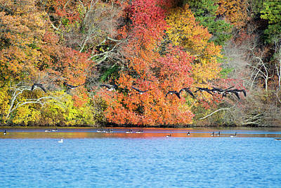 Belmont Lake State Park Wall Art - Photograph - Snowbirds In Flight by Joan D Squared Photography