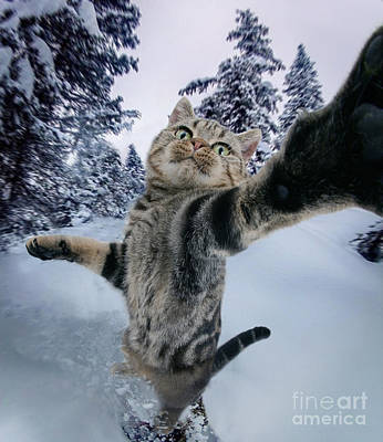 Photograph - Snowboarding Cat Selfie by Warren Photographic