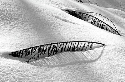 Photograph - Snowbound by Debbie Oppermann
