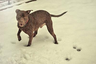Photograph - Snowdog by JAMART Photography