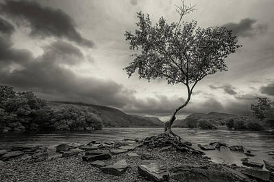 Photograph - Snowdonia Wales The Lonely Tree by John Williams