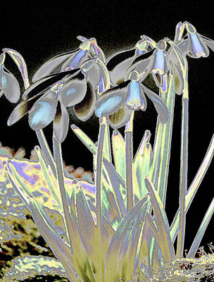 Photograph - Snowdrop Magic by Stephanie Grant