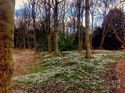 Photograph - Snowdrop Woods 2 by Joan-Violet Stretch