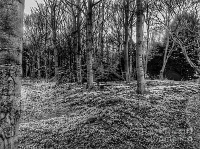 Photograph - Snowdrop Woods In Black And White by Joan-Violet Stretch