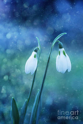 Impressionist Landscapes - Snowdrops falling on..... by LHJB Photography
