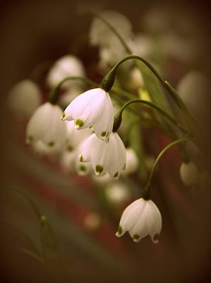 Photograph - Snowdrops by Jessica Jenney