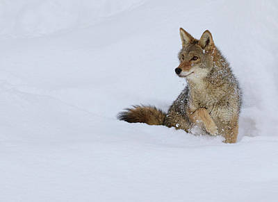 Photograph - Snowed Out  by Steve McKinzie