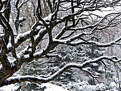 Old Trees Photograph - Snowfall And Tree by Elena Elisseeva