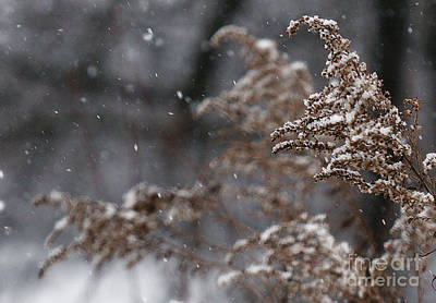Photograph - Snowfall by Linda Shafer