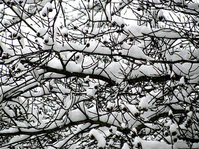 Pine Cones Photograph - Snowfall On Branches by Deborah  Crew-Johnson