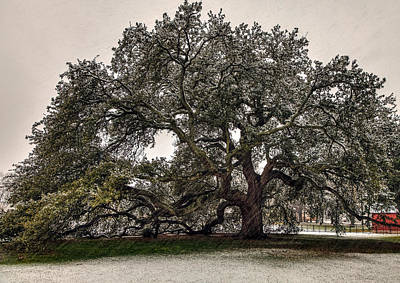 Snowfall On Emancipation Oak Tree Art Print by Jerry Gammon