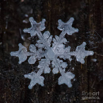 Photograph - Snowflake #24 by Doug Wewer