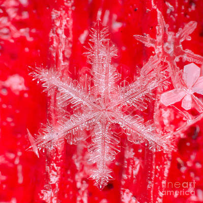 Photograph - Snowflake #25 by Doug Wewer