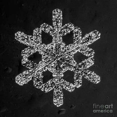 Photograph - Snowflake #27 by Doug Wewer