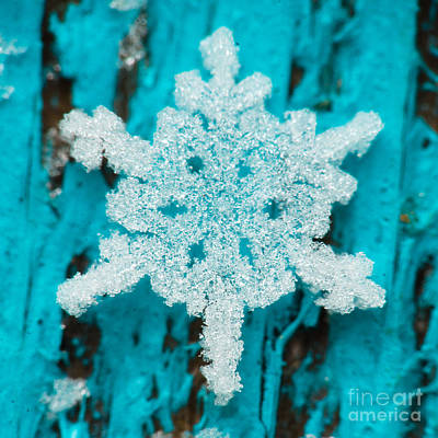 Photograph - Snowflake #30 by Doug Wewer