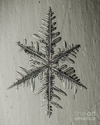 Photograph - Snowflake #39 by Doug Wewer