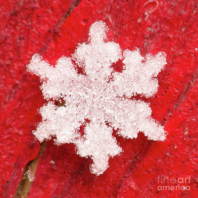 Photograph - Snowflake #61 by Doug Wewer