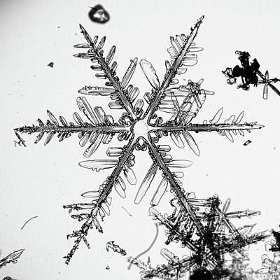 Photograph - Snowflake #77 by Doug Wewer