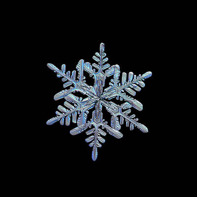 Photograph - Snowflake Macro Photo - 13 February 2017 - 1 Black by Alexey Kljatov