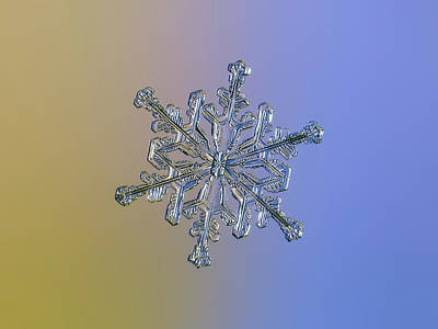 Photograph - Snowflake Macro Photo - 13 February 2017 - 2 Alt by Alexey Kljatov