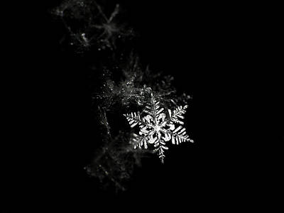 Studio Shot Photograph - Snowflake by Mark Watson (kalimistuk)