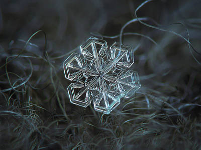 Snowflake Photo - Alcor Art Print