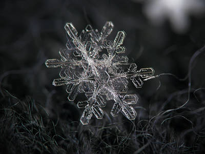 Photograph - Snowflake Photo - January 18 2013 Grey Colors by Alexey Kljatov
