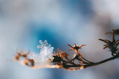 Snowflakes Photograph - Snowflake by Tracy  Jade
