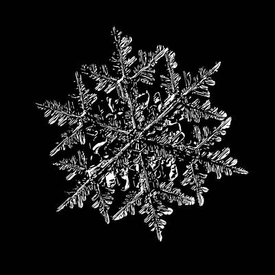 Digital Art - Snowflake Vector - 2017-02-13_3 Black by Alexey Kljatov