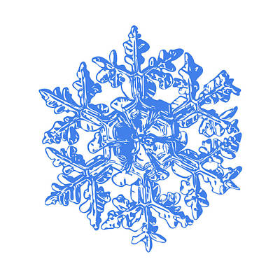 Digital Art - Snowflake Vector - Gardener's Dream White Version by Alexey Kljatov
