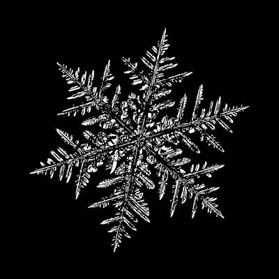 Digital Art - Snowflake Vector - Silverware Black by Alexey Kljatov