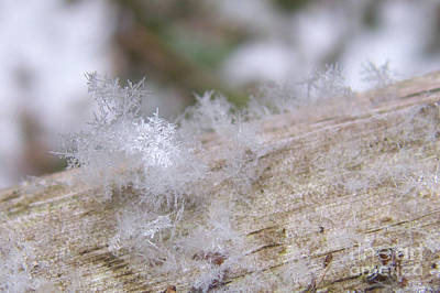Photograph - Snowflakes by Sharon Talson