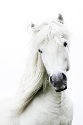 Close Up Horses Photograph - Snowhite by Gigja Einarsdottir