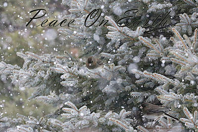 Photograph - Snowing In Maine - Peace On Earth Christmas Card by Sandra Huston