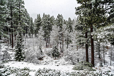 Photograph - Snowing In The Sierras by Maria Coulson