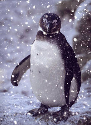 Photograph - Snowpenguin by Chris Boulton