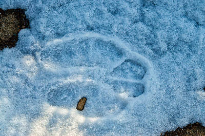 Photograph - Snowshoe Hare Tracks by Cathy Mahnke