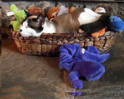 Photograph - Snowshoe Siamese Cat N Toys by Michele Avanti