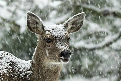 Photograph - Snowstorm - 365-340 by Inge Riis McDonald