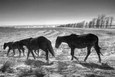 Konik Photograph - Snowstorm by Artur Baboev