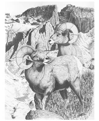 Animals Drawings - Snowstorm Mtn Rams by Darcy Tate